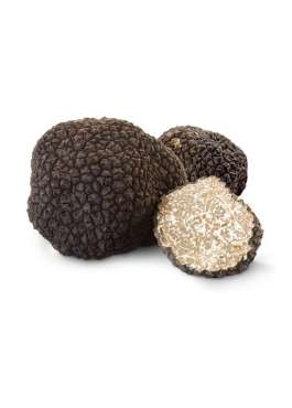 tuscany truffle vendita tartufi online - tartufo nero scorzone