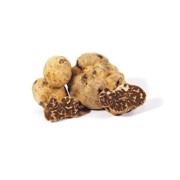 tuscany truffle vendita tartufi online - tartufo bianchetto marzuolo